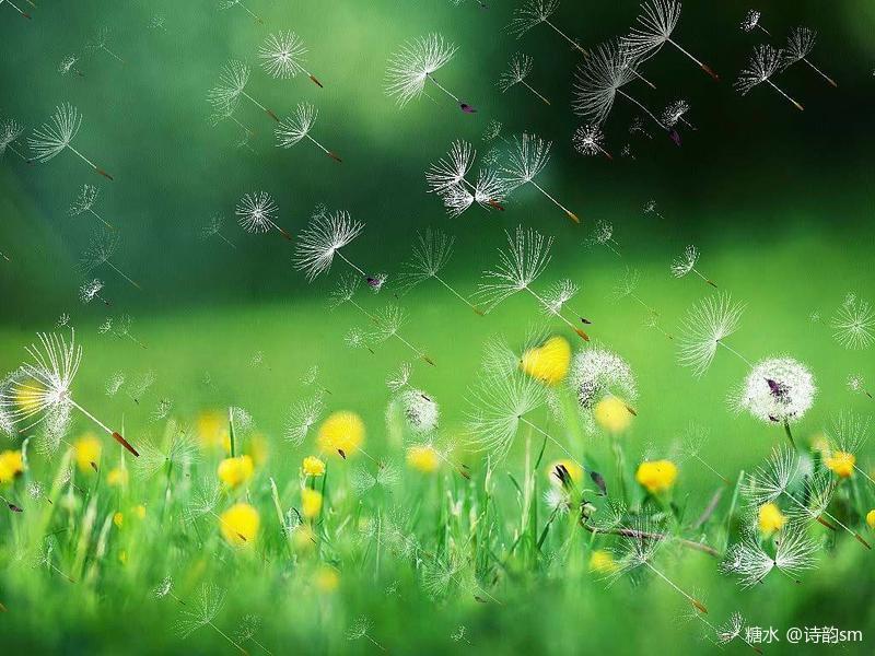 青草妹妹操_《》苗 圃    树苗们可以 私带灰包菌,马蜂窝 可以领着青草妹妹,捉
