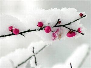 2017年01月09日 - 梅影(冰是睡着的水) - 梅影的博客